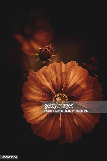fleur antique - fleur flore stock pictures, royalty-free photos & images