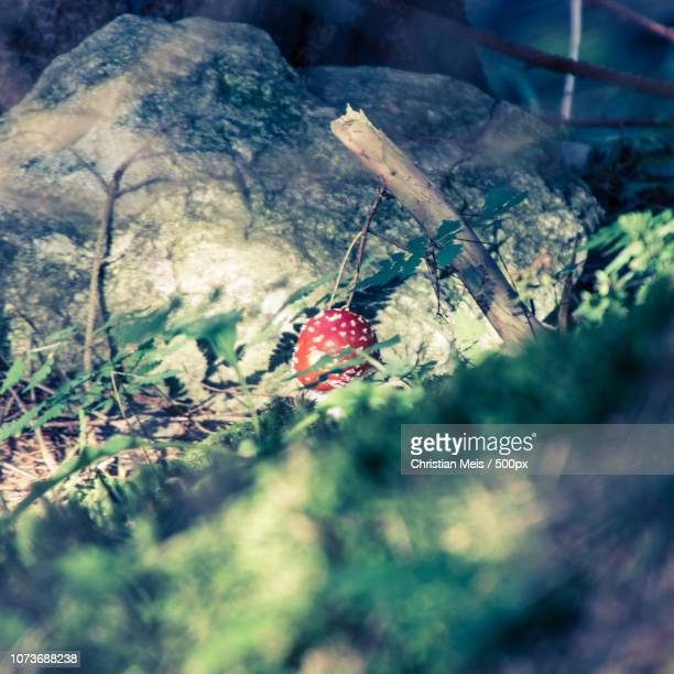 fliegenpilz im wald - wald stock pictures, royalty-free photos & images