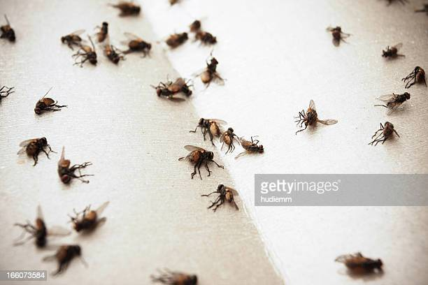 flies - housefly stock pictures, royalty-free photos & images