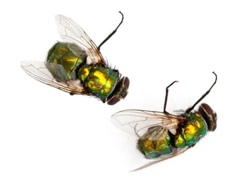 Flies 93055110