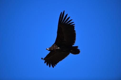 Flight of Eagle - gettyimageskorea