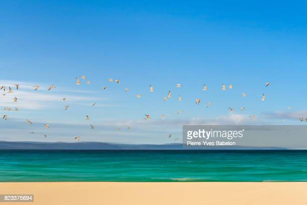 Flight of terns