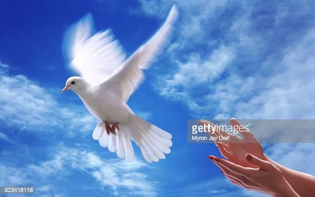 flight of the dove - laisser partir photos et images de collection