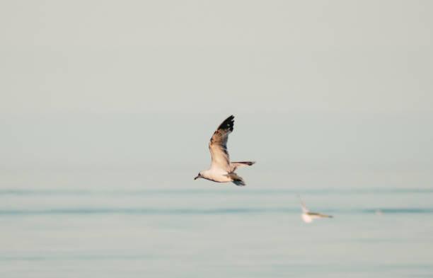 Flight of the Gulls,Ajax,Ontario,Canada