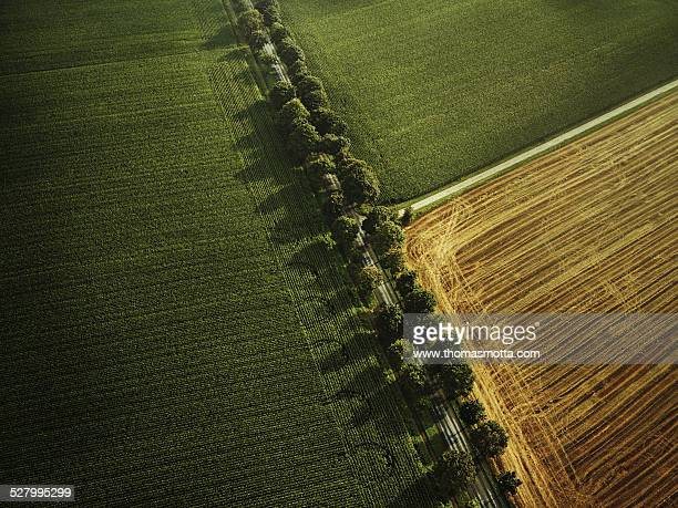 flight over a field with dirt road and avenue - 休耕田 ストックフォトと画像