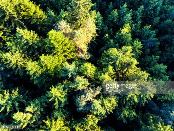 flight over the bavarian forest, lower bavaria - árvore de folha caduca - fotografias e filmes do acervo