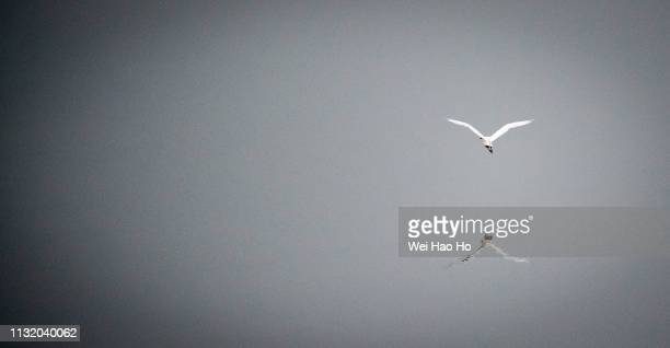 flight reflections - arizona bird stock pictures, royalty-free photos & images