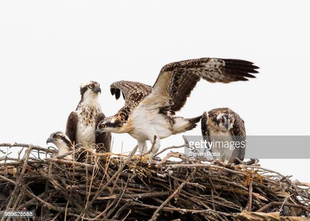 flight school - hawk nest stock photos and pictures