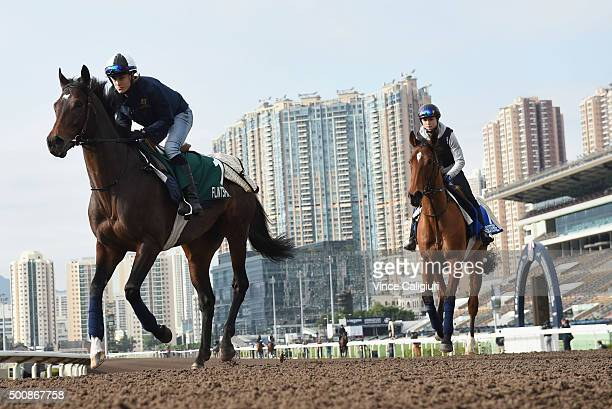 Flintshire and Esoterique from France gallop on the All Weather Track during a trackwork session at Sha Tin Racecouse on December 11, 2015 in Hong...