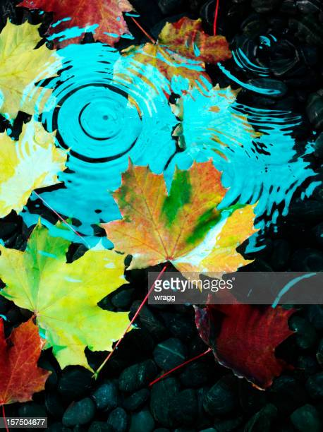 Floating Autumn Leaves
