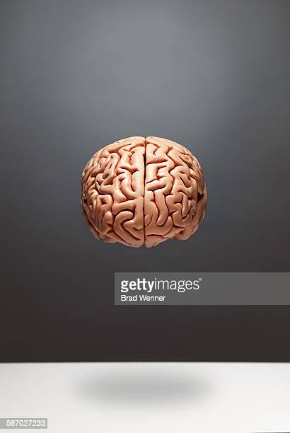 Floating Brain