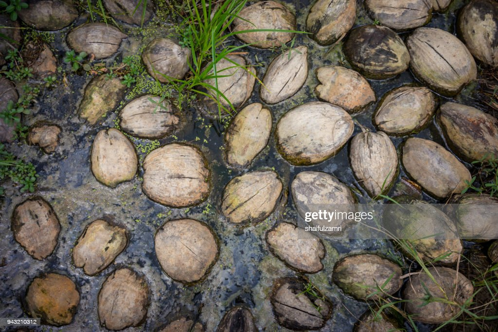 Floating coconuts in pond : Stock Photo