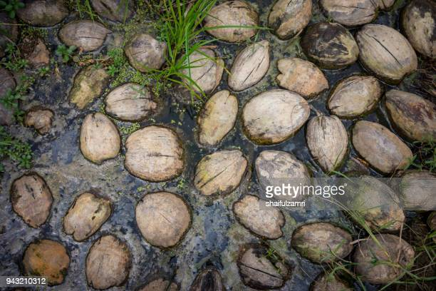 floating coconuts in pond - shaifulzamri photos et images de collection