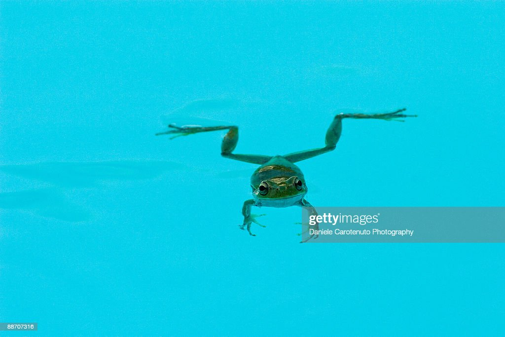 Floating green frog : Stock Photo