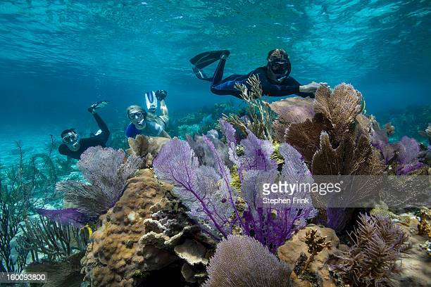 floating in crystalline waters - nassau stock pictures, royalty-free photos & images