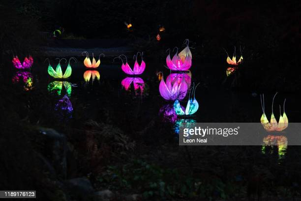Floating lanterns are seen in a lake at Wakehurst Kew's wild botanic gardens during the launch of the winter lantern trail on November 21 2019 in...