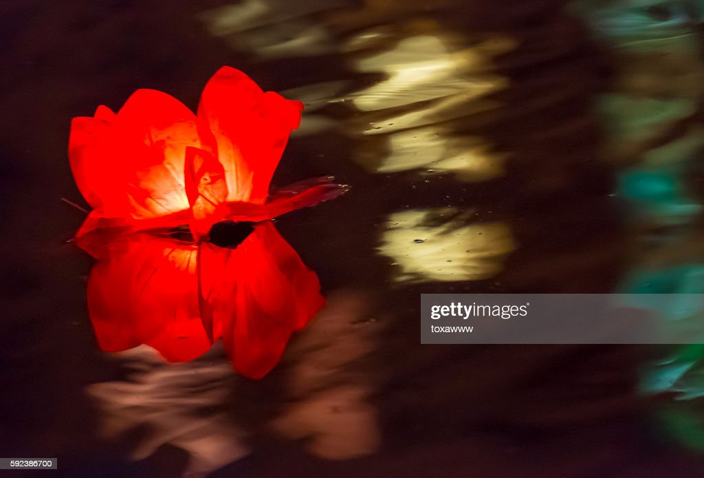 Floating Lotus Flower Paper Lanterns On Water Stock Photo Getty Images