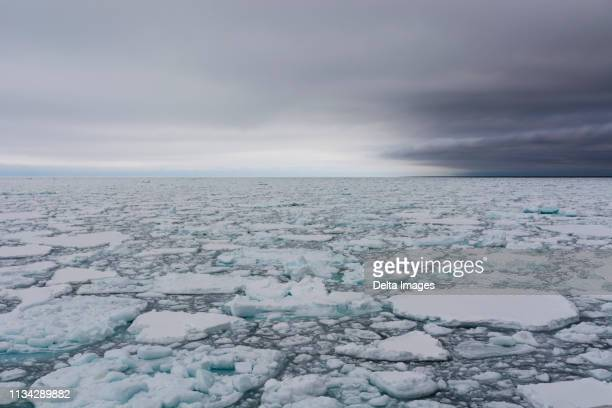 floating pieces of pack ice, polar ice cap, 81north of spitsbergen, norway - pack ice stock pictures, royalty-free photos & images