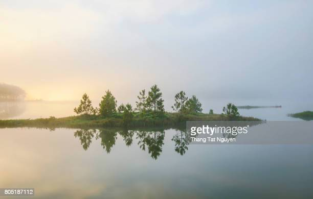 Floating pine tree island in mist