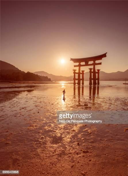 floating torii gate at miyajima. - luogo d'interesse internazionale foto e immagini stock