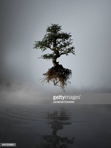 floating tree above lake in mist - tree roots stock pictures, royalty-free photos & images