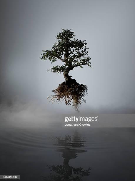 floating tree above lake in mist - fonte - fotografias e filmes do acervo
