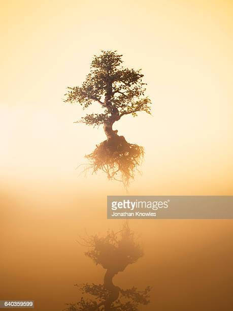 Floating tree over water at dawn
