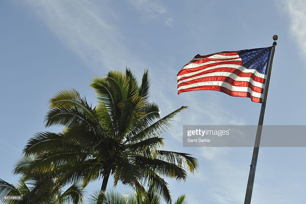 Floating US flag by palm tree : Stock Photo