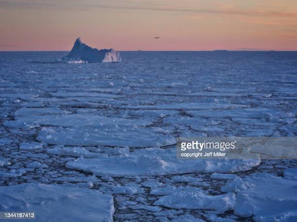 a flock of adélie penguins (pygoscelis adeliae) on a round iceberg at sunset, southern ocean, antarctica. - pack ice stock pictures, royalty-free photos & images