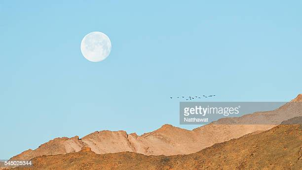 Flock of Bird flying in front of the moon over Altai Mountains Mongolia