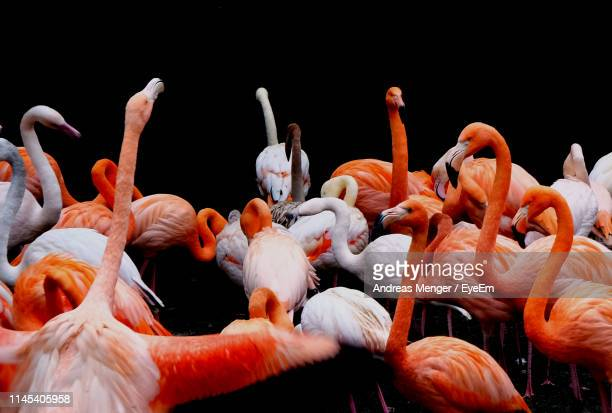 flock of birds against black background - zoology stock pictures, royalty-free photos & images