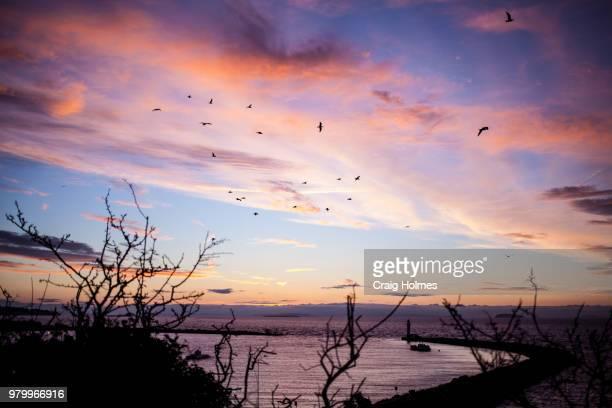 Flock of birds against sky at sunrise over Jackson Bay, South Island, New Zealand