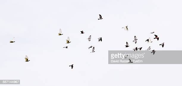 Flock Of Birds Against Sky