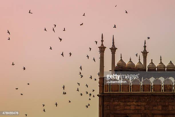 flock of birds at sunset - agra jama masjid mosque stock pictures, royalty-free photos & images