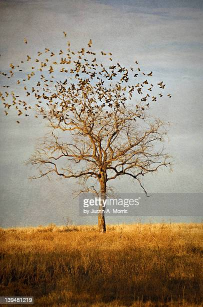 flock of birds departing - bare tree stock pictures, royalty-free photos & images