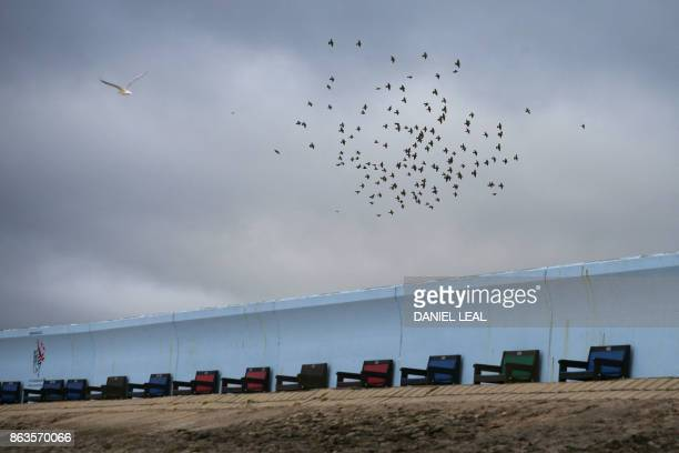 A flock of birds flies above the promenade of Canvey Island Essex on October 20 2017 A small island community in the Thames Estuary that voted...