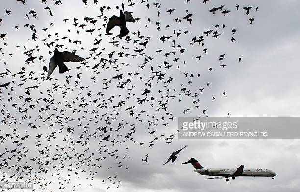 A flock of birds flies as a Delta airlines commuter plane lands at Reagan International Airport in Washington DC on November 18 2015 AFP PHOTO/ANDREW...