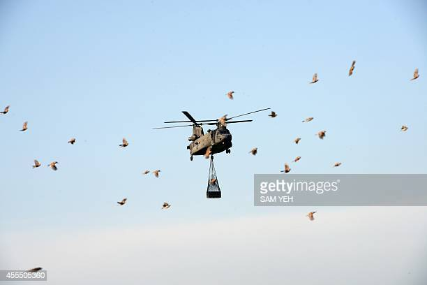 A flock of birds fly over as a USmade CH47 Chinook helicopter lifting a box of supplies above the highway in the southern Chiayi county during the...
