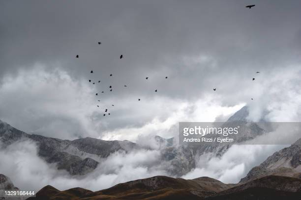 flock of birds flying in sky, gran sasso, abruzzo, mount aquila. - andrea rizzi stock pictures, royalty-free photos & images