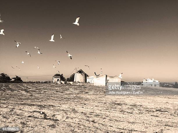 Flock Of Birds Flying Over Field Against Clear Sky