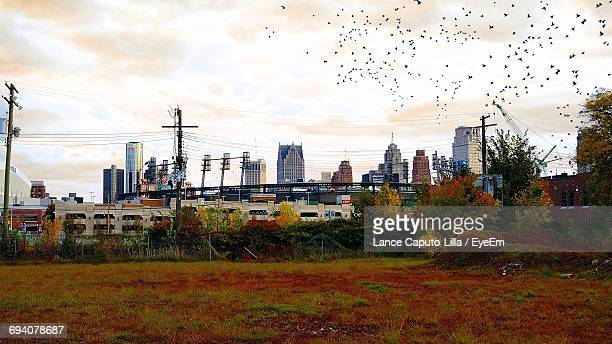 flock of birds flying over field by city during autumn - caputo foto e immagini stock