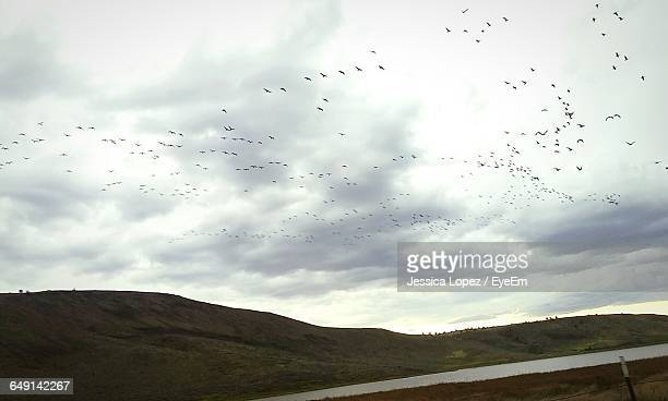 flock of birds flying over landscape against sky - lopez stock pictures, royalty-free photos & images