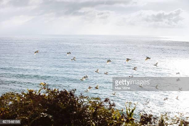 Flock of birds flying over ocean