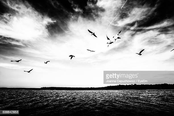 Flock Of Birds Flying Over Sea Against Cloudy Sky