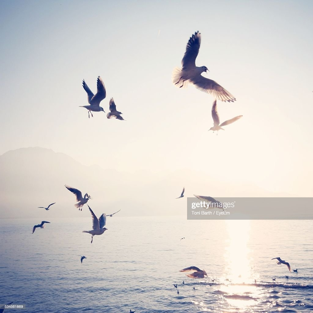Flock Of Birds Flying Over Sea On Sunny Day : Stock-Foto