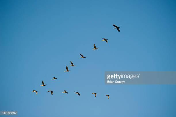 Flock of Birds Formation Flying