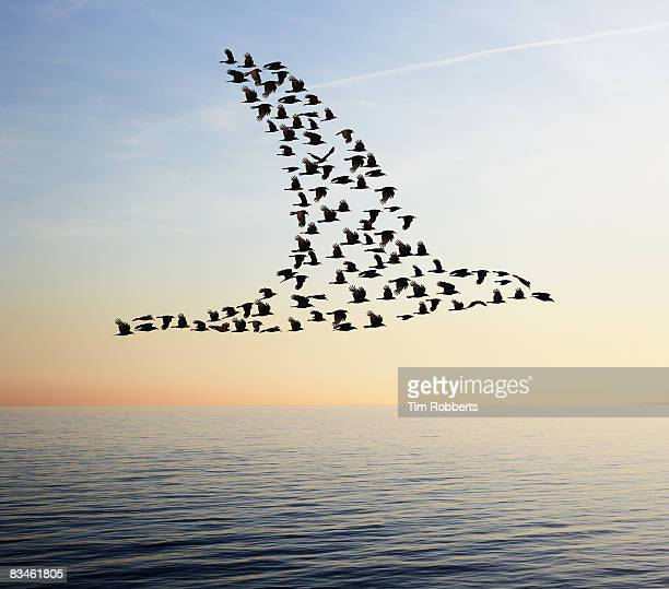 Flock of birds in bird formation flying above sea