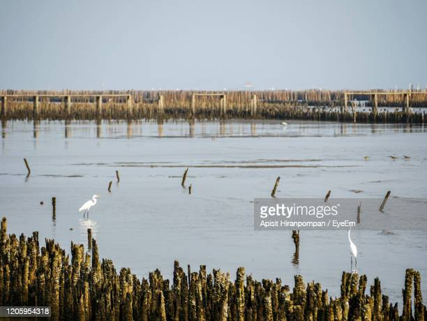 flock of birds in lake against sky - apisit hiranpornpan stock pictures, royalty-free photos & images