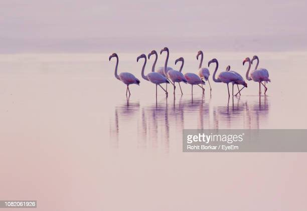 flock of birds in sea during sunset - colony group of animals stock photos and pictures