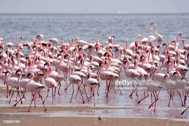 flock of birds in sea - walvis bay stock photos and pictures